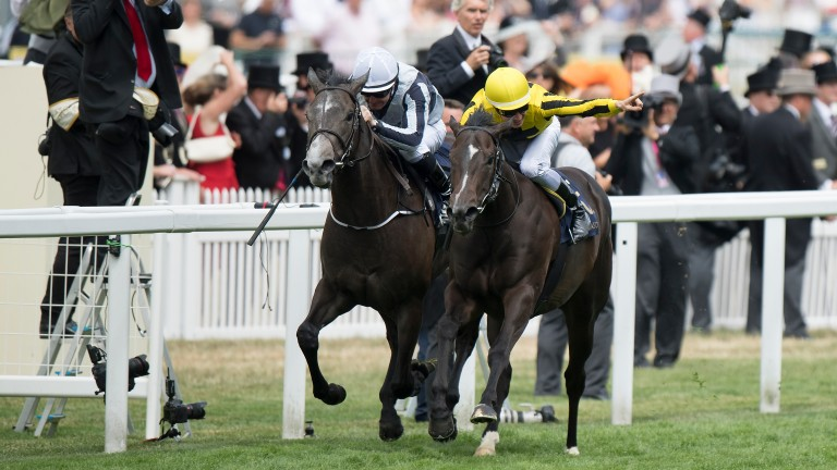 Different League, carrying the Marnanes' yellow and black silks, beats Alpha Centauri at Royal Ascot