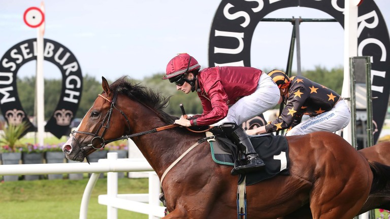 Above: the Archie Watson-trained three-year-old is nominated as a horse to follow