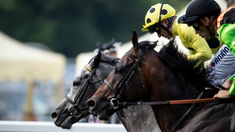 Horseracing punters could be back in betting shops on June 15