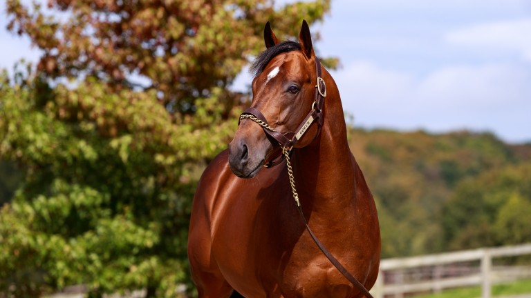 Goken: has made a fine start with his first two-year-old runners