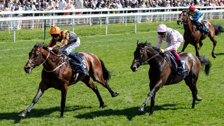 Telecaster: winner of the Dante Stakes last year