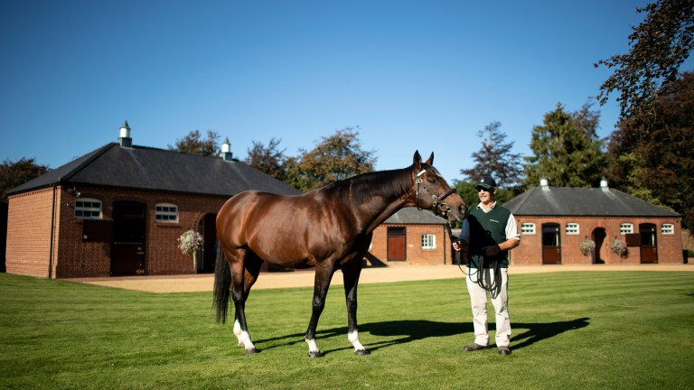 Frankel with stallion man Rob Bowley at Banstead Manor Stud