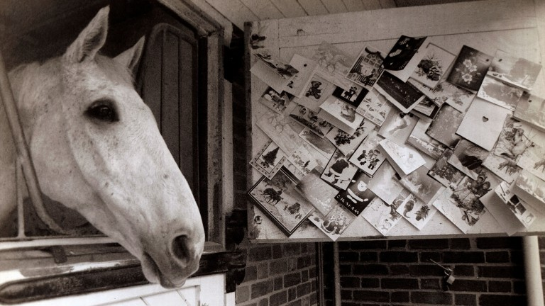 Desert Orchid: the most recognisable and popular horse in training during his racing days