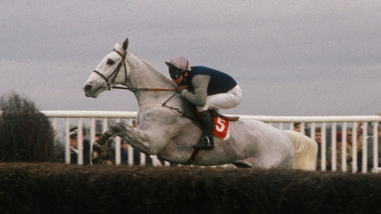 Desert Orchid: won the King George VI Chase at Kempton four times during his fine career