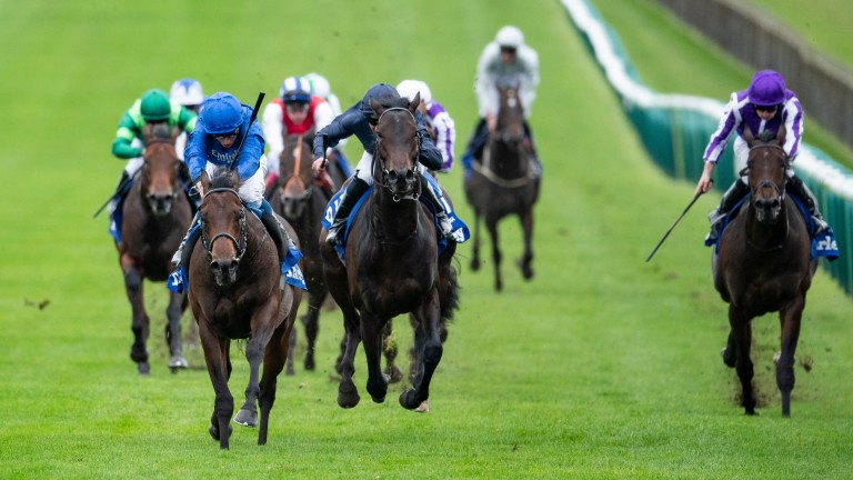 Arizona (dark blue) chased home Pinatubo in the Dewhurst