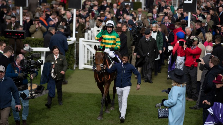 Champ: a half-brother to the RSA Chase hero is among the Goffs Land Rover Sale catalogue