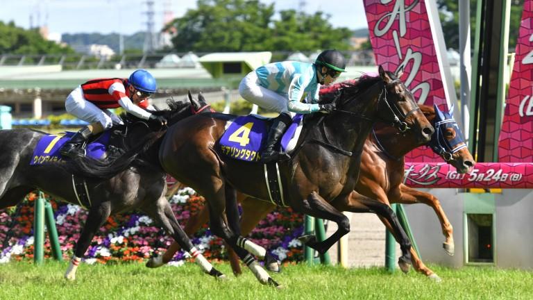 Daring Tact and Kohei Matsuyama on the nearside winning the Yushun Timba
