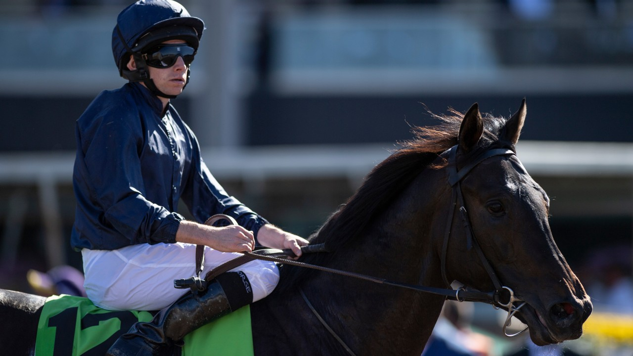 Ryan moore 2000 guineas betting cryptocurrency pictures of snakes