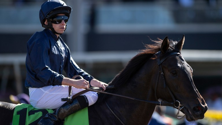 """Aidan O'Brien on Arizona: """"His last two pieces of work have been very good and we've just changed a few things with him"""""""