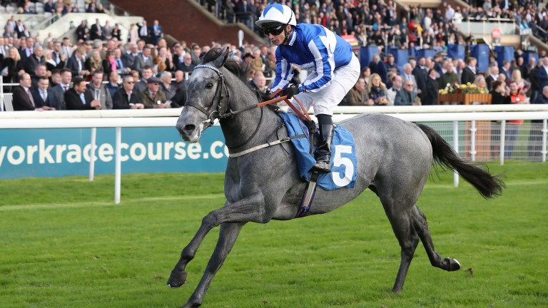 Art Power: an exciting sprinter this season for Tim Easterby