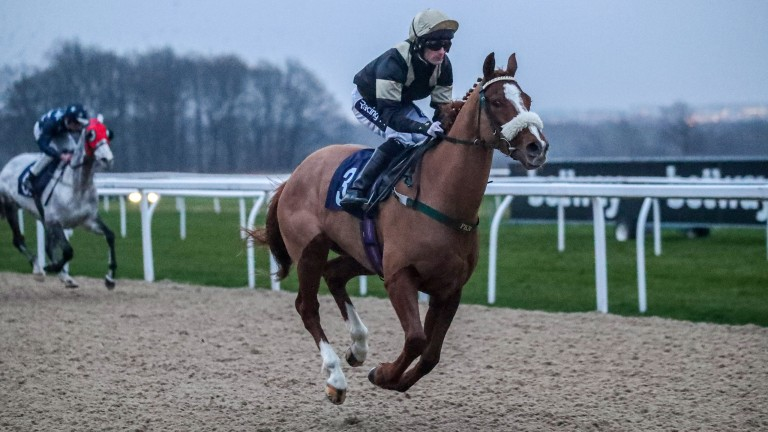 Ice Pyramid: a dual winner at Newcastle this year