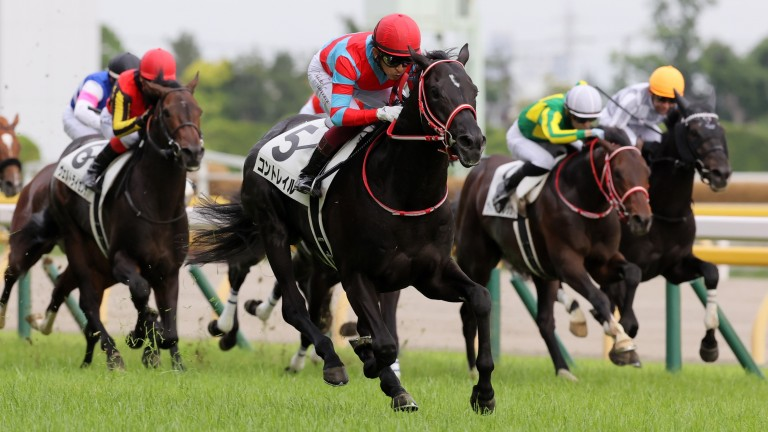 Contrail: extended his unbeaten advantage to five in the Tokyo Yushun (Japanese Derby)