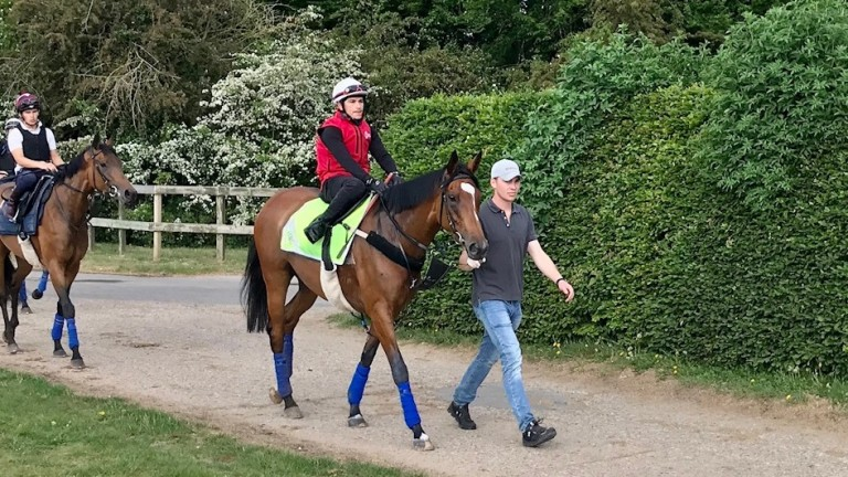 Enable and rider Ben De Paiva are led to the Al Bahathri by trainer's son and assistant trainer Thady Gosden