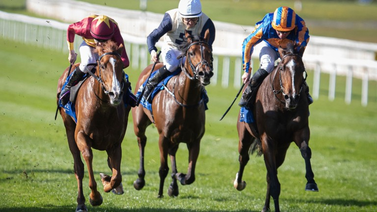A New Dawn (left): had Auxilia and Celestial Object (white cap) behind her when chasing home this year's French Oaks heroine Fancy Blue in the Listed Staffordstown Stud Stakes last year