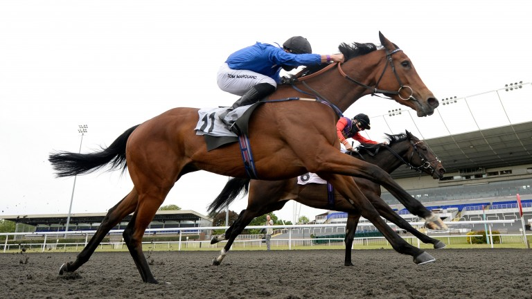 Shatha: takes a big step up in class following her shock win at Kempton last week