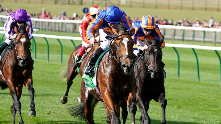 Royal Dornoch: 33-1 to land the Qipco 2,000 Guineas on Saturday