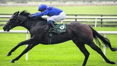 Pinatubo: outstanding at two; will he match those achievements at three?