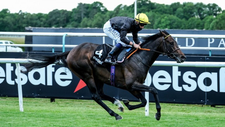 English King: the Lingfield Derby trial winner is one of 17 entered in the Investec Derby
