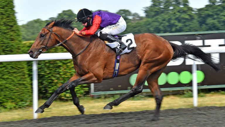 First Receiver: easy winner at Kempton earlier this month