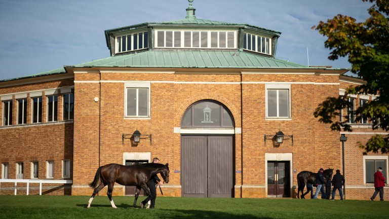 Park Paddocks: hosts the inaugural Somerville Yearling Sale