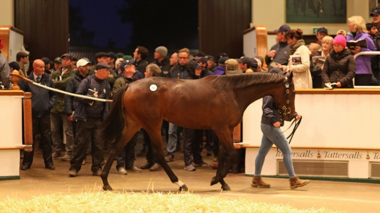 Shadwell's record-breaking Book 2 purchase in the ring