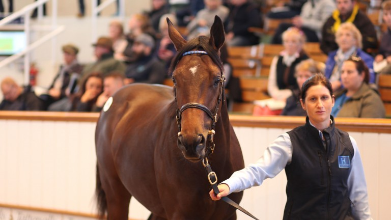 The Dubawi half-brother to Barney Roy brings 3,600,000gns in the Park Paddocks sales ring