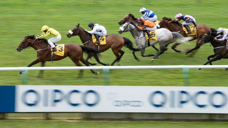 Far Above: showed speed to burn in the Palace House Stakes
