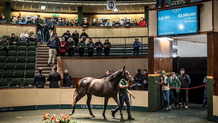 The Galileo filly out of Green Room brings €3,000,000 at the Goffs Orby Sale