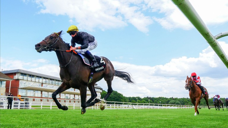 English King: the Lingfield Derby Trial winner heads the Epsom market