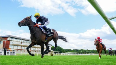 English King: the Lingfield Derby Trial winner is another Classic hopeful for Camelot