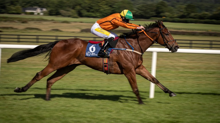 Sceptical: bargain buy could upstage richer rivals in Saturday's Diamond Jubilee Stakes