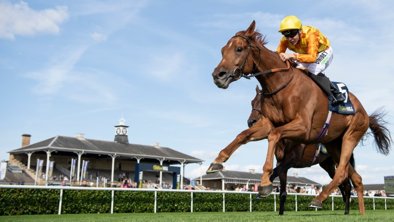 Sleeping Lion: James Fanshawe's runner has won over course and distance before