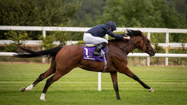 Armory: could be well equipped to beat stablemate Love in the Prince of Wales's Stakes