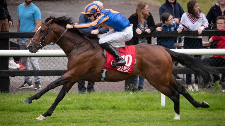 Lancaster House: three wins from four starts