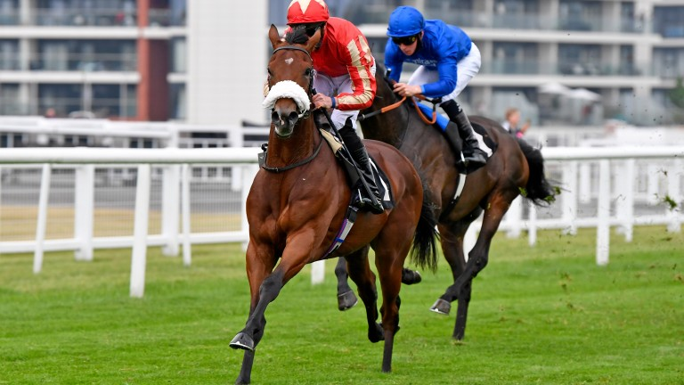 """First Prophet: """"Hopefully he goes there with a cracking chance,"""" says trainer Charlie Fellowes"""