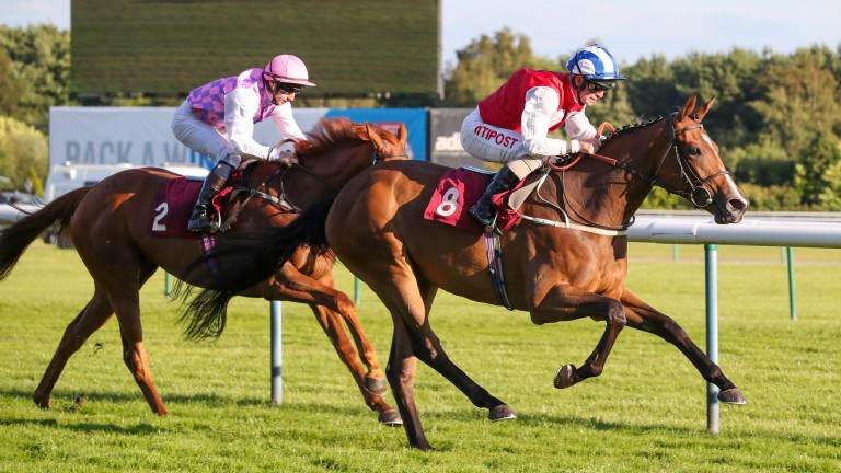 West End Girl: due to line-up in the Ribblesdale Stakes on Tuesday after selling for £420,000