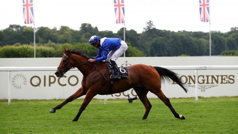 Lord North won over the Champion Stakes course and distance in the Prince of Wales's Stakes