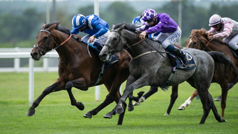Hukum: struck in the King George V Stakes at 12-1