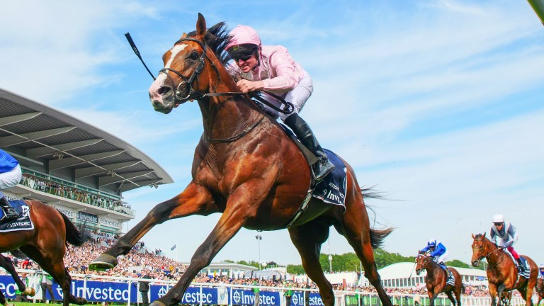 Anthony Van Dyck: the Derby winner broke down in the Melbourne Cup