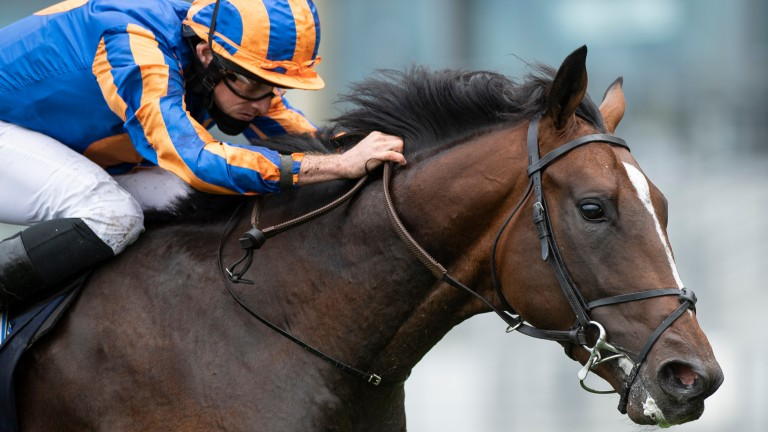 Battleground: leading contender for Aidan O'Brien in the Juvenile Turf