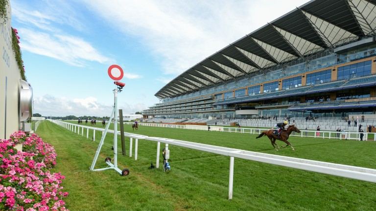 In a different league: Stradivarius and Frankie Dettori cruise to a ten-length Gold Cup win