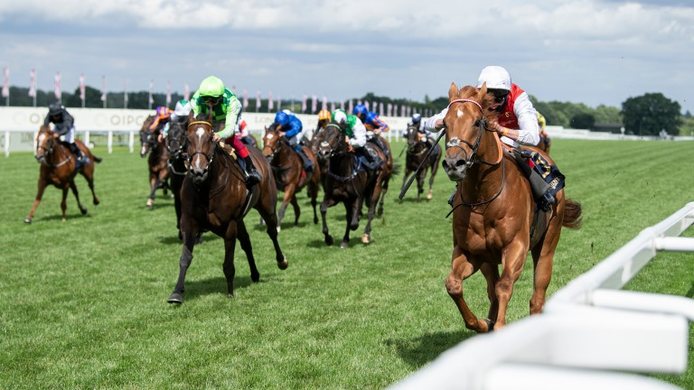 Golden Horde (right): a dominant winner of the Commonwealth Cup