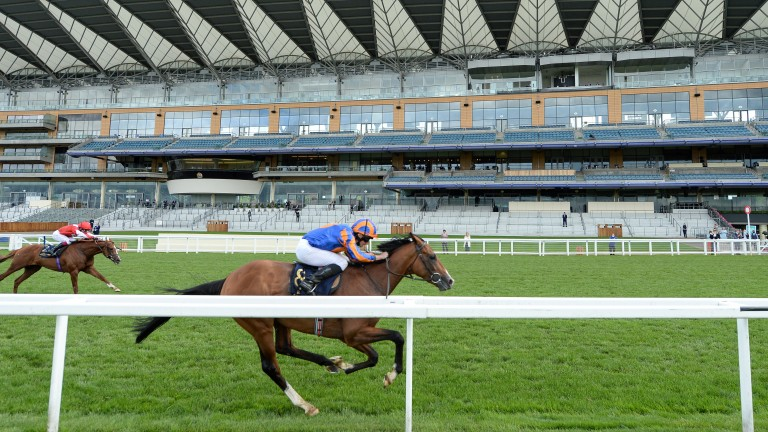Santiago: is the 5-2 favourite for the Irish Derby