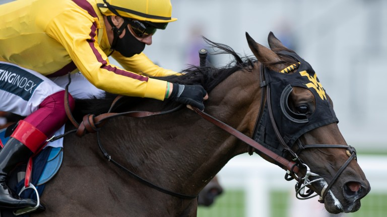 Campanelle: followed up her Royal Ascot victory at Deauville