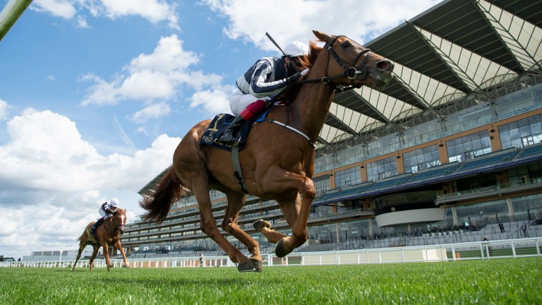 Alpine Star: as short as 6-1 for the Investec Oaks after her impressive Ascot success