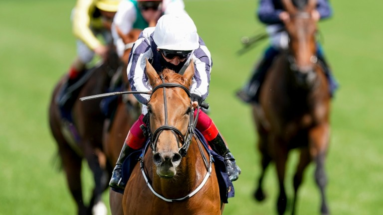 Alpine Star: in line to make her return at York on Friday