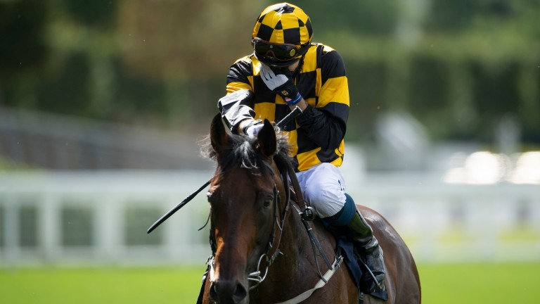Hello Youmzain and Kevin Stott will bid for Prix Maurice de Gheest glory at Deauville on Sunday