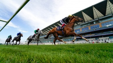 Stradivarius: on his way to an electric third triumph in the Gold Cup at Royal Ascot