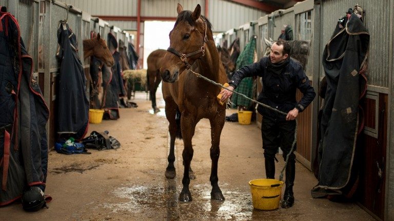 Liam Treadwell washes down a horse at the Aramstone, Herefordshire, stables of Venetia Williams in 2018