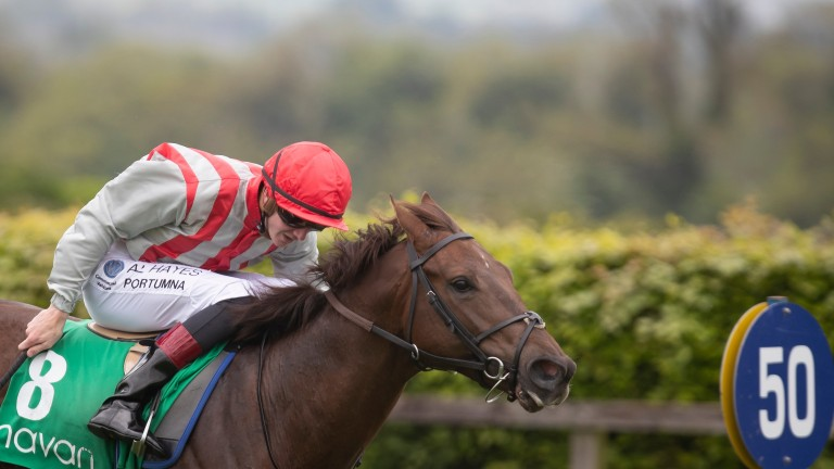 Rebel Tale: set to take his chance at the Curragh on Sunday